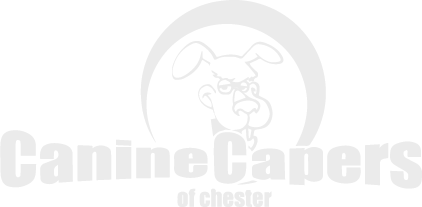 Canine Capers of Chester Logo in the footer